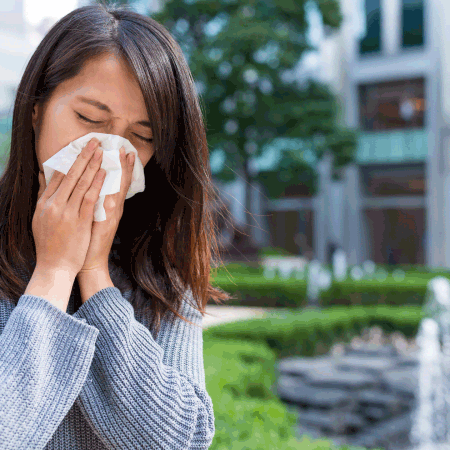 cannabis and allergies